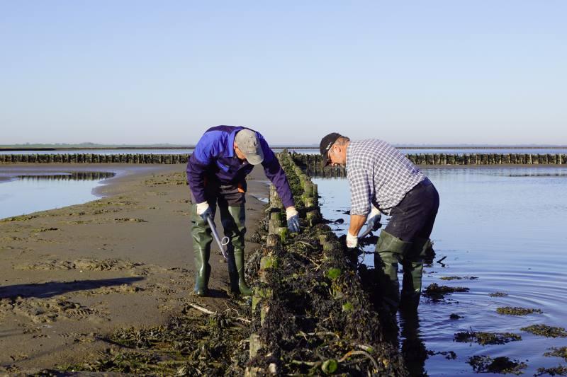 Küstenschutz im Watt