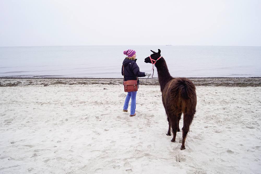 Lama am Strand