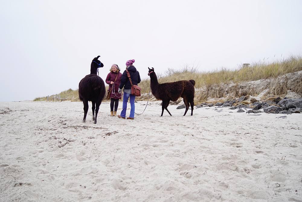 Am Strand mit Lamas
