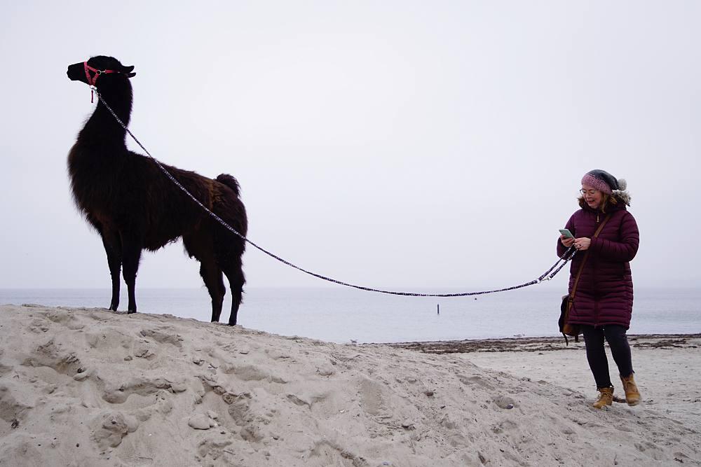 Mit Lama am Strand