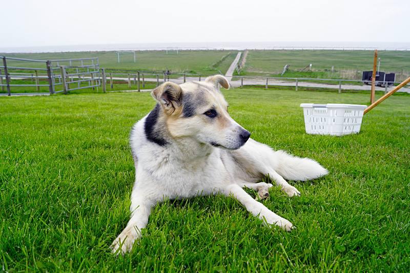 Hund auf Oland