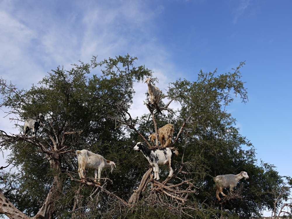 Gruppenbild auf Arganbaum