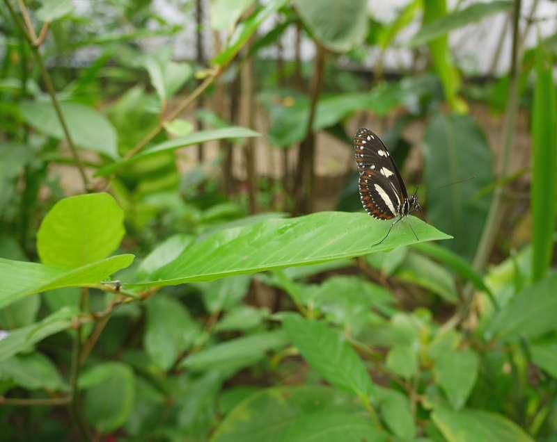 Schmetterling im Life Centre