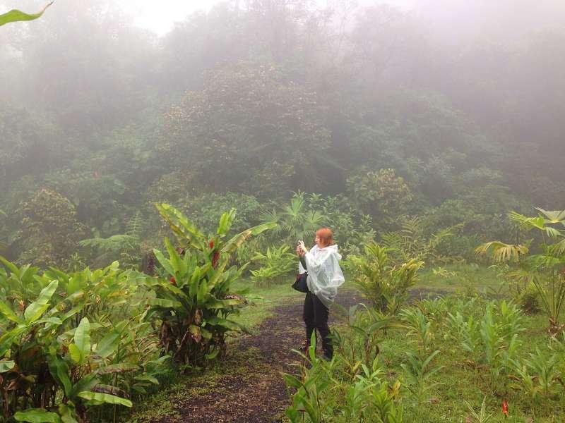 Lost im Nebelwald