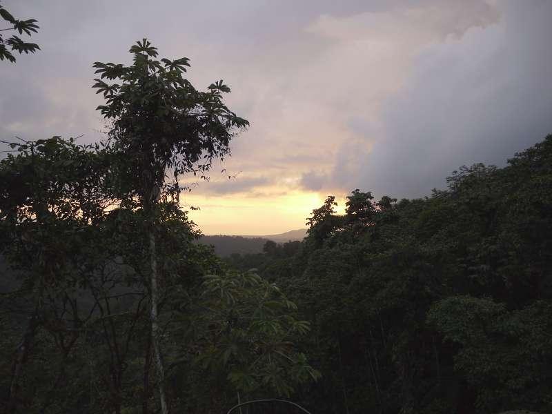 Sunset im Dschungel