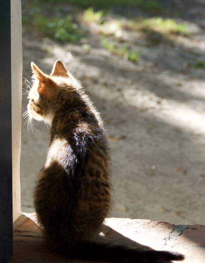 Kleine Katze an der Tür