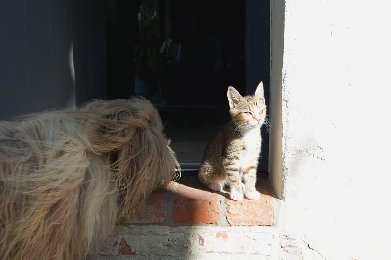 Wie Hund und Katz: Julchen und Matilda