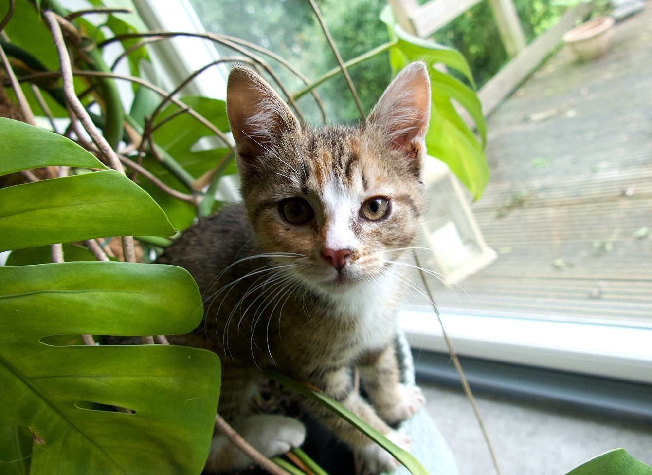 Kätzchen Matilda