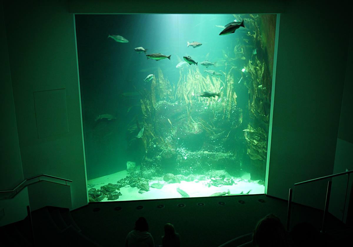 Fische im Multimar
