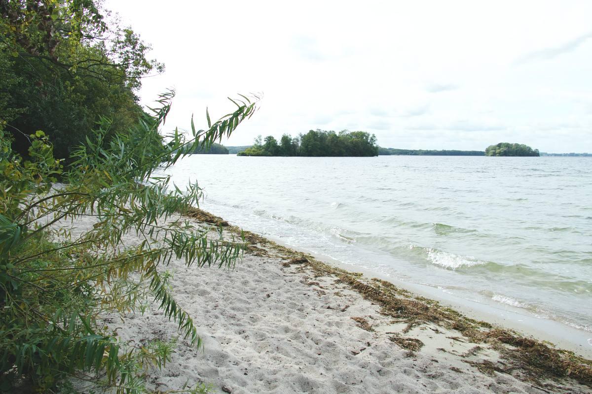 Wo Bäume aus dem Wasser wachsen