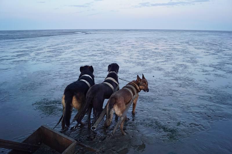 Die Hunde des Reusenfischers