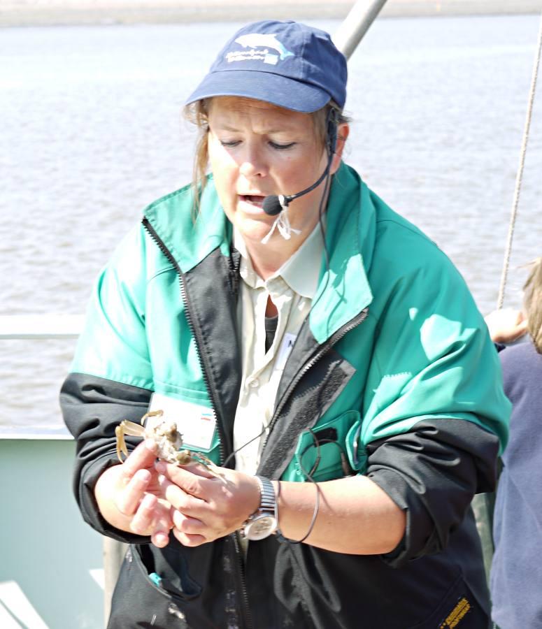 Seetierfang auf der Eider