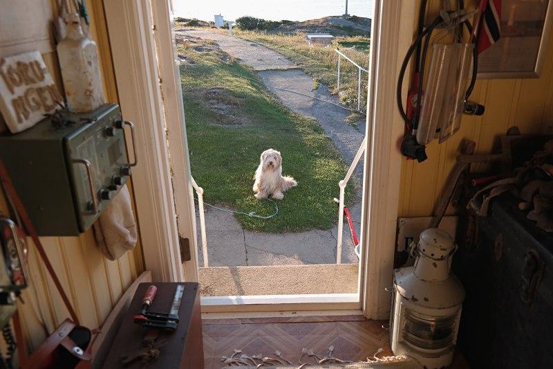 Der Hund wartet.