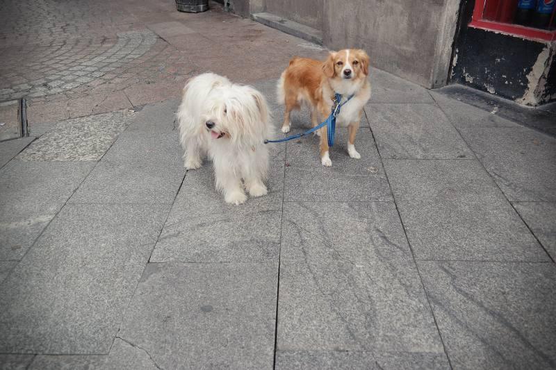 Brave Hunde in Bilbao