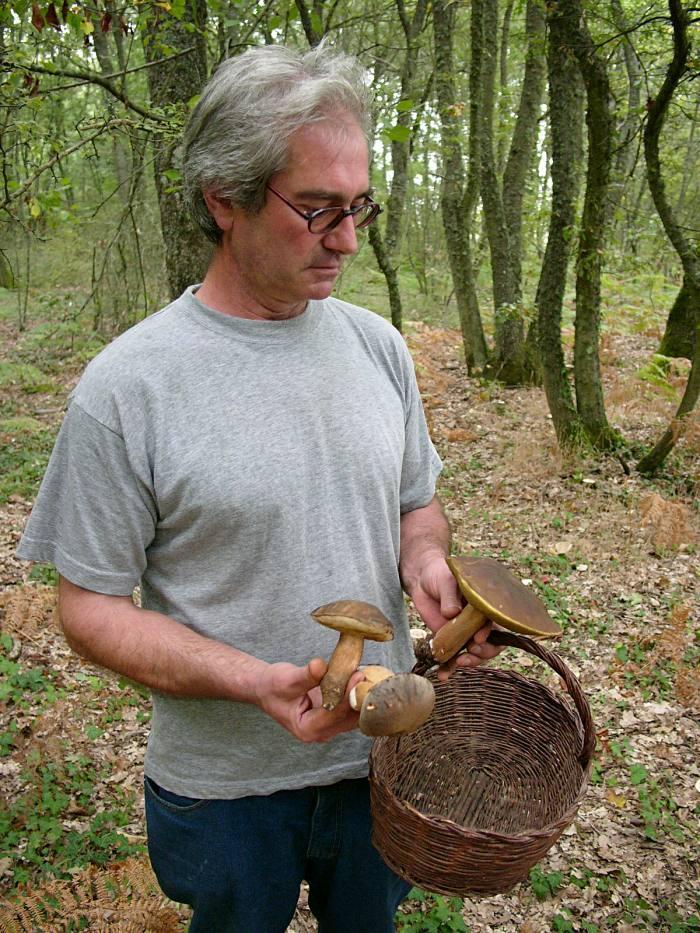 Steinpilze sammeln