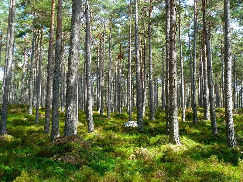 Wald © WooDu