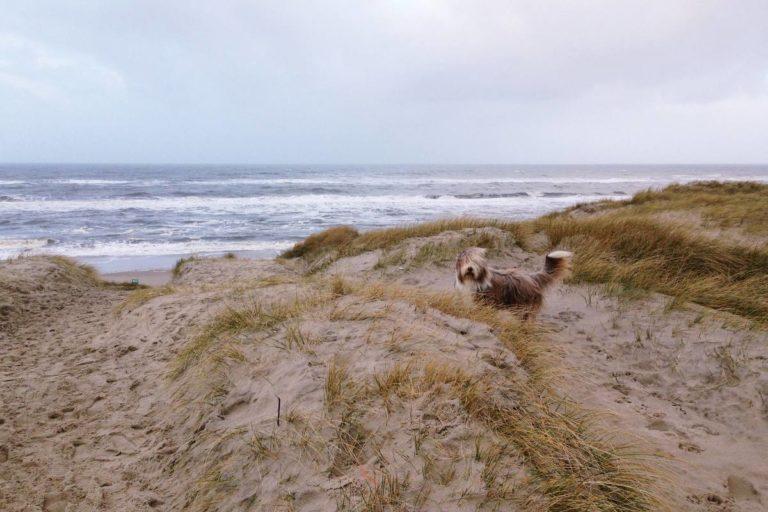 Hund am Strand, Dänemark
